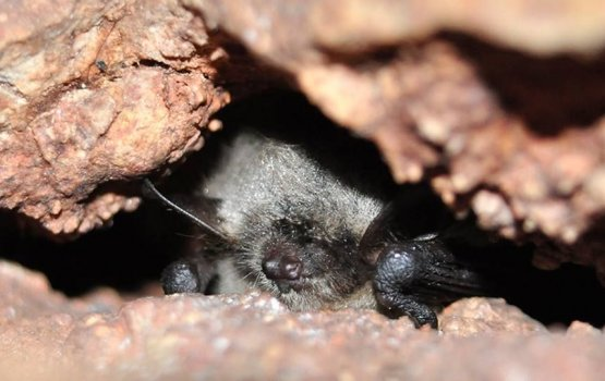 1 октября – закрытие сезона в Центре летучих мышей