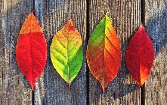 Цветотерапия: как справиться с осенней хандрой