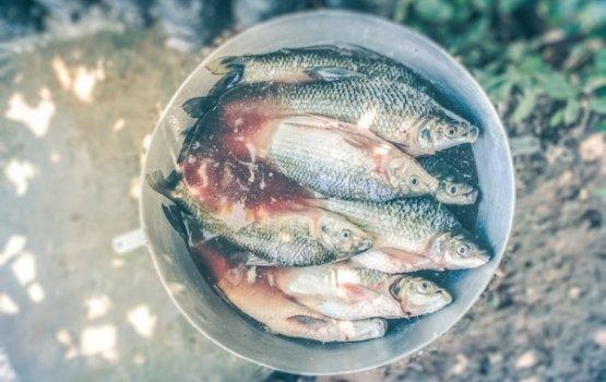 «Двинская уха» - пятерка суповых рецептов из рыб Даугавы