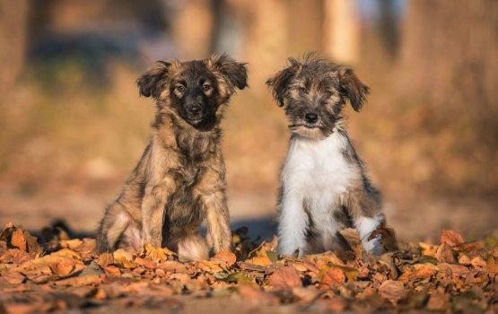 Животные из приюта поучаствовали в фотосессии