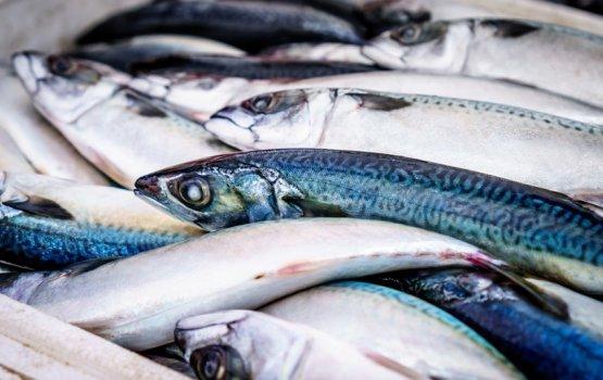 «Рыболовная сводка»: январь в Латгалии