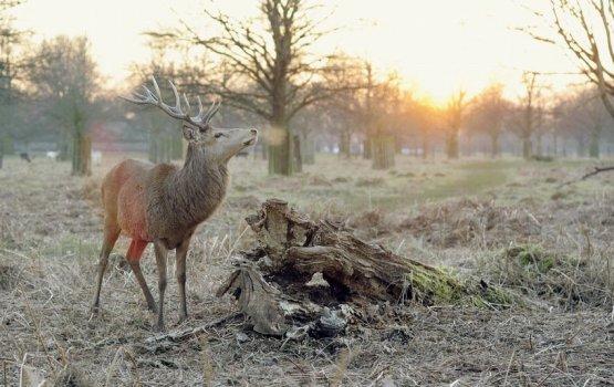 Экзамен для охотников и руководителей охоты стал еще сложнее