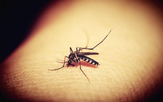 Сочная жертва: топ-9 причин, почему комары кусают больше одних людей и игнорируют других