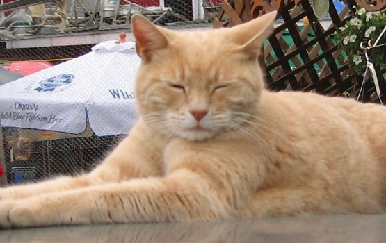 Занимавший должность мэра города на Аляске кот умер в возрасте 20 лет