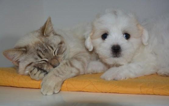 Географ подсчитал прожорливость домашних кошек и собак
