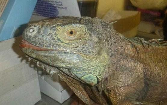 В Киеве обнаружили «динозавра», любящего кабачки