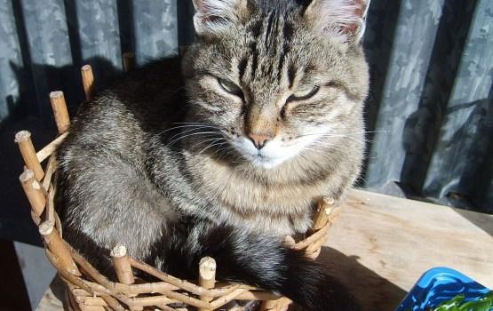 Поздравьте своего котика с праздником!