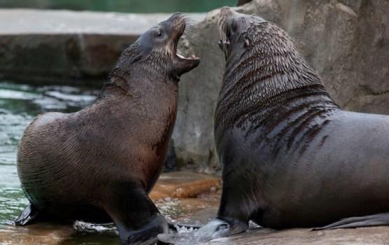 ПВС будет добиваться закрытия циркового шоу с дикими животными