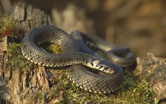 Перекур со змеей
