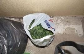 В квартире выращивали запрещенные растения