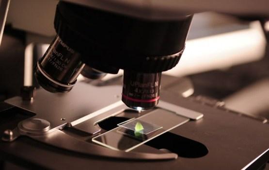 Ученые создали жиросжигающий пластырь