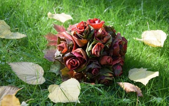 Под знаком осенних роз