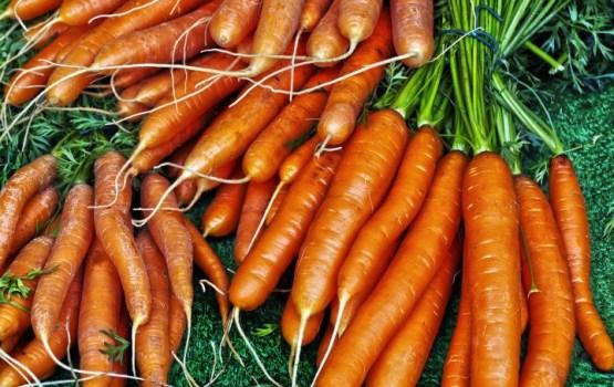 Когда сажать морковь осенью под зиму