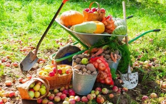 Чем заняться в саду и огороде в октябре?
