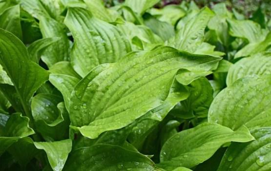 Названы лекарственные растения, которые помогут быстро похудеть