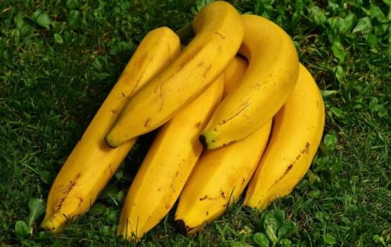 Миру грозит банановая катастрофа: новый грибок поражает плантации