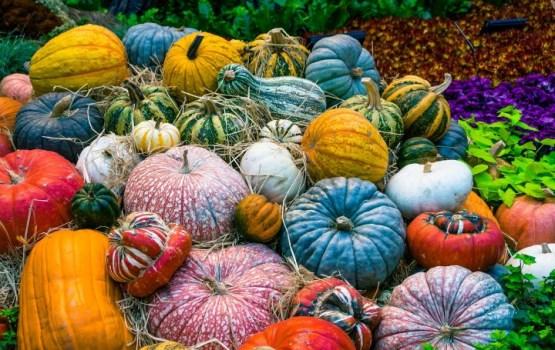 Осенние блюда: самые актуальные местные продукты этого сезона