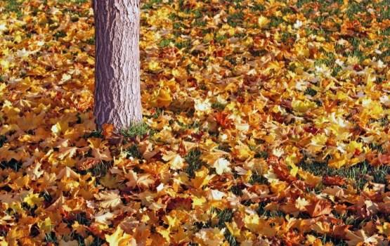 Уже холода, а листья не собрали…