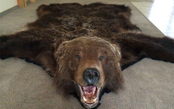 Продают слоновую кость и шкуры медведя