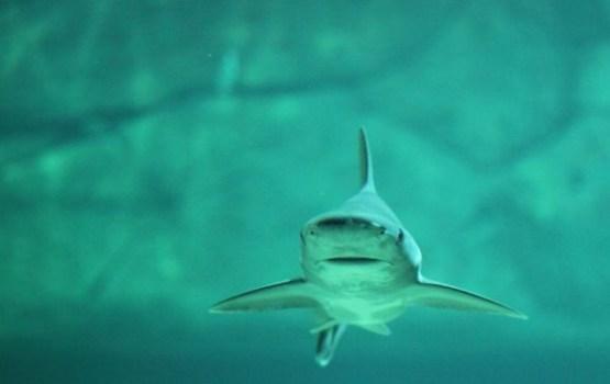 Муж заснял нападение акулы на жену во время медового месяца