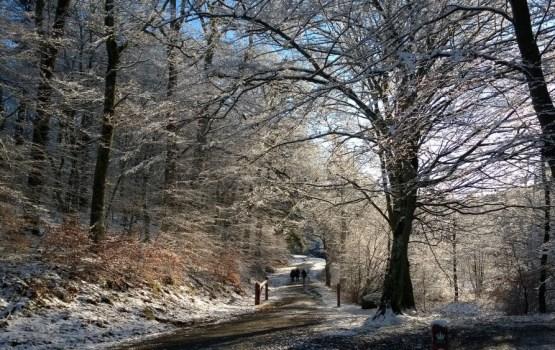 Прогноз: Новый год в этом году снежным не будет