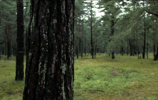 Совет по управлению кризисами признал ситуацию в лесах катастрофической