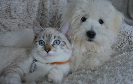 Общество защиты животных советует оградить домашних питомцев от вызванного салютом стресса