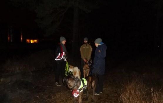 Добровольцы Bezvests в Улброкском лесу обнаружили тело пропавшего пенсионера