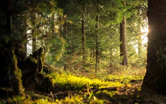 Сообщение о плане обслуживания рекреационного леса Daugavpils