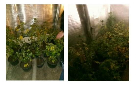 В одном из местных гаражей выращивали марихуану