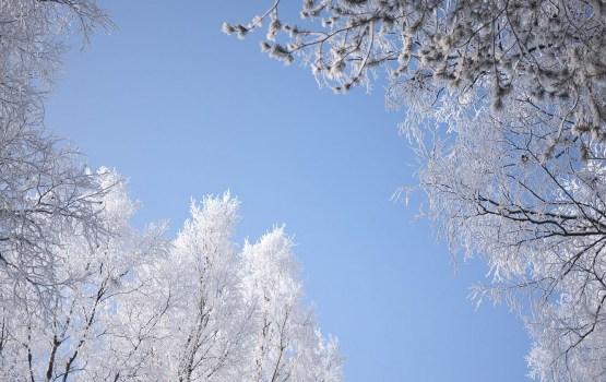 Грядущей ночью ожидается мороз до -10 градусов