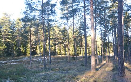 Специалисты рассказали о том, что будет с даугавпилсским лесом