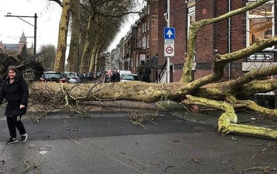 Из-за урагана в Северной Европе погибли восемь человек (ВИДЕО)