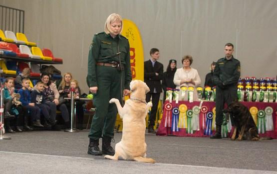 Выставки собак в год Собаки