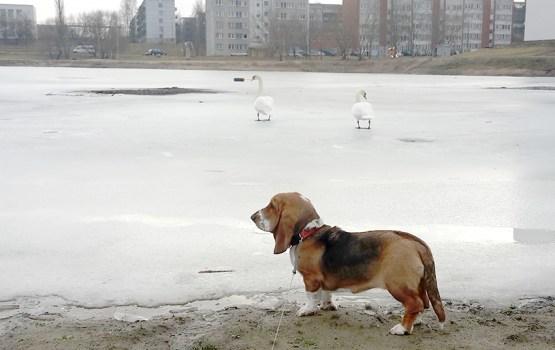 В Даугавпилсе отменена пошлина за содержание собак