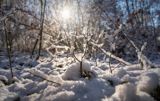 В начале следующей недели ожидается потепление