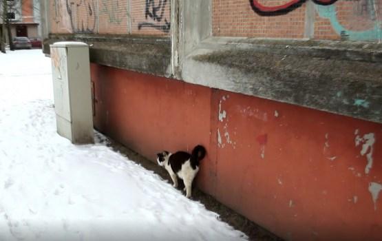 Как одна добрая инициатива спасла бродячих котов холодной зимой (ВИДЕО)
