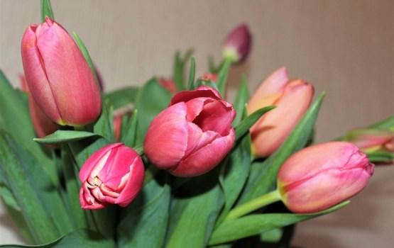 О празднике 8 Марта, подарках и букетах для борща (ВИДЕО)