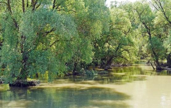 Топ-5 лучших болот мира и кто там обитает