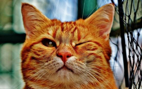 В марте у нас новый фотоконкурс «Без кота и жизнь не та!»