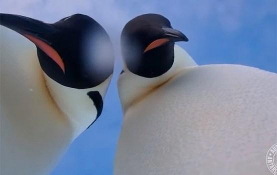 Пингвины нашли в Антарктиде фотокамеру и сделали селфи