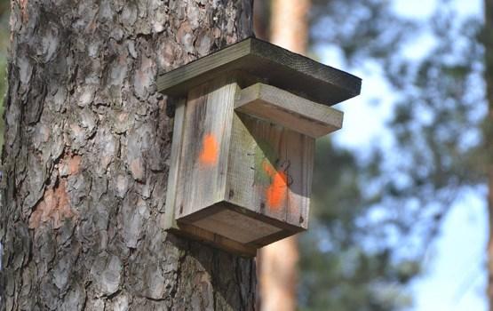 Стропской лес в ожидании защитников