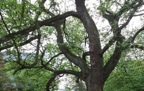 Кто не любит городские деревья?