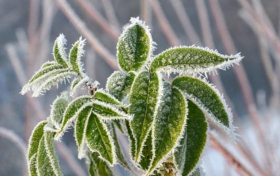 Ночью в некоторых районах Латвии температура опустилась ниже нуля