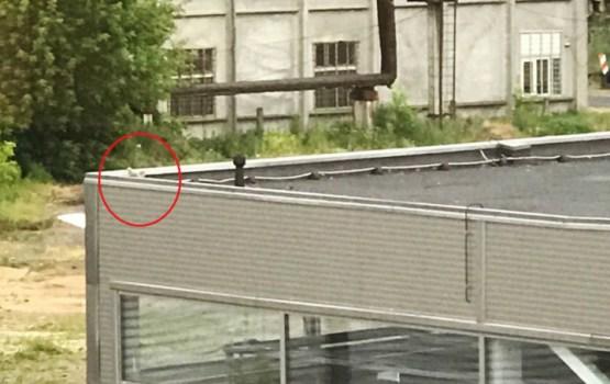 Птенцов чайки выбросили с крыши. Очевидец обратился в полицию (ОПРОС)