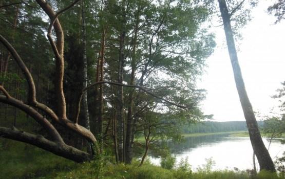 Daugavas loki: обойденный вниманием туристов левый берег
