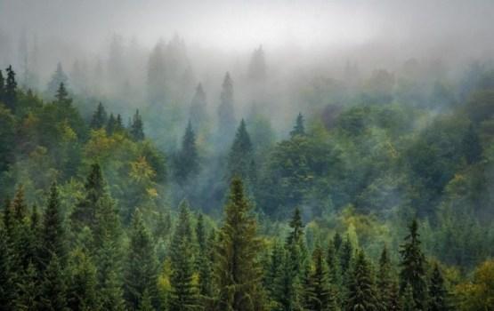 Эксперт: в Латвии растут деревья времен Наполеона