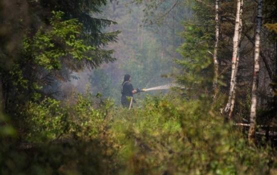 Пожар под Талси: пламя удалось удержать