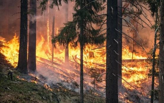 Калифорнию охватили лесные пожары: объявлен режим ЧС