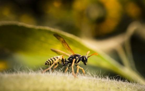 Семь человек попали в больницы после того, как их жалили осы